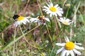 Low Carbon biodiversity