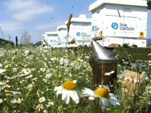 Low Carbon bee hives