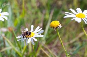 Low Carbon biodiversity - bees