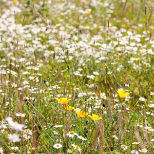 Wildflowers on a solar park